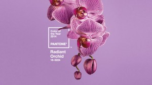 Pantone Color of the Year has been revealed - and the world is about to see a lot more of Radiant Orchid